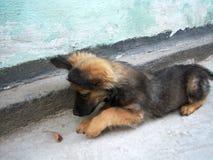 使用与事假的小狗 库存照片