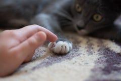 使用与他的朋友的可爱的猫 免版税库存图片