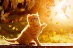 使用与叶子的幼小小猫 免版税图库摄影
