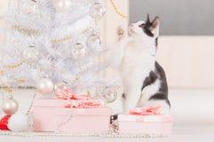 使用与圣诞树装饰品的小的猫 免版税库存图片