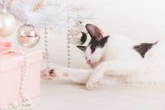 使用与圣诞树装饰品的小的猫 免版税库存照片