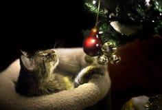 使用与圣诞树装饰品的猫 免版税图库摄影
