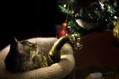 使用与圣诞树装饰品的猫 免版税库存图片