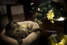 使用与圣诞树装饰品的猫 库存照片