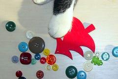 使用与圣诞节玩具的猫的播种的射击 免版税库存照片
