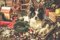 使用与圣诞节装饰的狗 库存照片