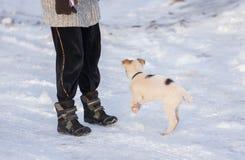 使用与在一条积雪的冬天街道上的大师的混杂的品种小狗 库存图片