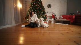 使用与在圣诞树和壁炉背景的愉快的小狗的女孩  影视素材