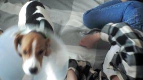 使用与在床上的一条狗的妇女 股票视频