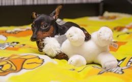 使用与在床上的白色玩具的小狗在一条黄色毯子 图库摄影