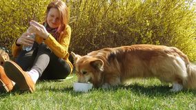 使用与在草坪的小狗狗的微笑的女孩 股票录像