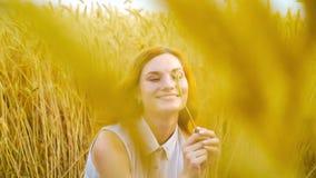 使用与在金黄麦田的麦子耳朵的年轻浪漫红发妇女 股票视频