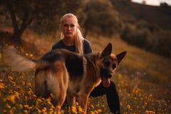 使用与在黄色花的领域的德国牧羊犬狗的白肤金发的女孩 库存照片