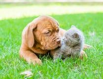 使用与在绿草的一只小猫的红葡萄酒小狗 库存图片