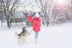 使用与在winte的一条西伯利亚爱斯基摩人品种狗的小女孩 免版税库存图片