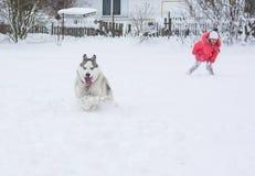 使用与在winte的一条西伯利亚爱斯基摩人品种狗的小女孩 免版税库存照片