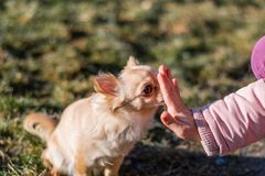 使用与她的狗的年轻gril外面在领域 图库摄影