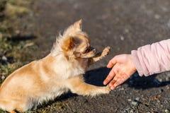 使用与她的狗的年轻gril外面在领域 库存照片