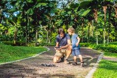 使用与寄生虫、人和男孩使用与飞行的寄生虫在晴朗的秋天庭院里,愉快的年轻男孩和父亲的爸爸和儿子 免版税库存图片