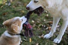 使用与小狗的母亲在庭院里 库存照片
