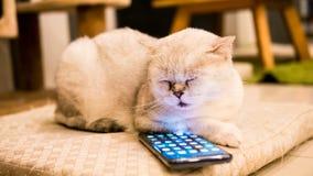 使用与智能手机三星S9加上有趣和看在屏幕上的蓬松白色猫 免版税库存图片