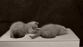 使用与有孔的一个纸板箱的小猫 股票录像