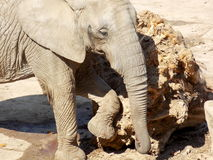使用与木头的大象 免版税库存图片