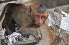 使用与母亲的小淘气小猴子 库存照片
