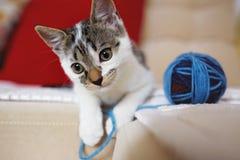 使用与毛线的一只逗人喜爱的可爱的小猫 免版税库存照片