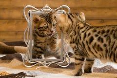 使用与照片框架的两只小猫,看彼此 库存照片
