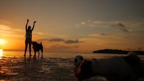 使用与狗的年轻无忧无虑的女孩在海滩在惊人的日落期间 酸值phangan泰国 慢动作的HD 影视素材