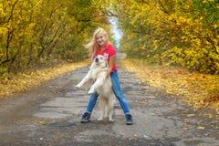 使用与狗金毛猎犬的女孩在秋天公园 库存图片