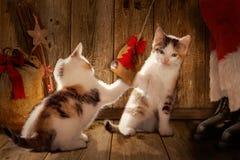 使用与猫的圣诞老人, 免版税图库摄影