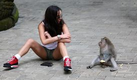 使用与猴子的美丽的女孩在猴子森林在巴厘岛印度尼西亚,有野生动物的俏丽的妇女 图库摄影