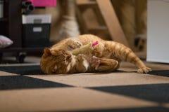 使用与玩具的猫 免版税库存照片