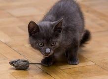 使用与玩具老鼠的一只美丽的俄国蓝色小猫 库存图片