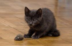 使用与玩具老鼠的一只美丽的俄国蓝色小猫 库存照片