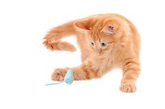 使用与玩具老鼠的橙色小猫 库存照片
