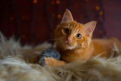 使用与玩具老鼠的逗人喜爱的蓬松红色小猫 免版税库存照片