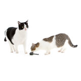 使用与玩具鼠标的二只猫 免版税图库摄影