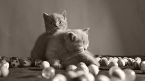 使用与球的小猫 影视素材