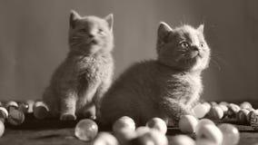 使用与球的小猫 股票视频