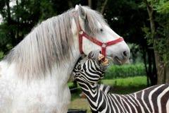 使用与白马的斑马 室外滑稽的动物的画象 免版税库存图片