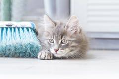 使用与笤帚的猫蓝色小狗 免版税库存照片