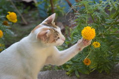使用与花的可爱的猫 图库摄影