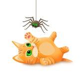 使用与蜘蛛的小猫 免版税图库摄影