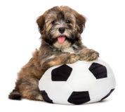 使用与足球玩具的逗人喜爱的愉快的havanese小狗 库存照片