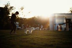 使用与滑稽的多壳的狗的美丽的少妇户外在公园在日落或日出 库存照片