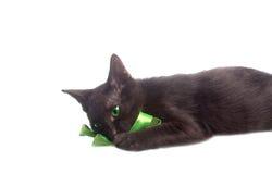 使用与绿色丝带的逗人喜爱的小猫 免版税库存图片