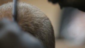 使用剪刀和梳子的理发师 影视素材